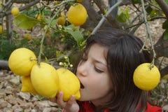 Lemon eater. Young european girl biting a lemon tree hung Royalty Free Stock Photos