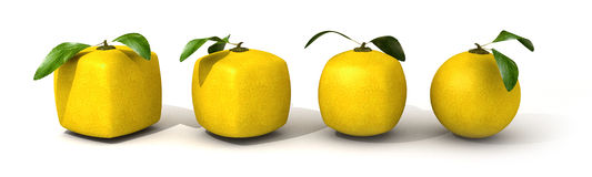 Lemon evolution Stock Photos