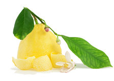 Lemon, flower lemon, dried peel. Royalty Free Stock Image
