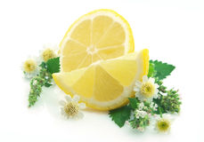 Lemon with flowers Stock Photos