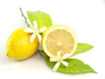 Lemon flowers and lemon fruits