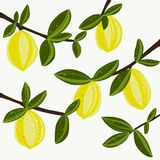Lemon fresh illustration vector vector illustration
