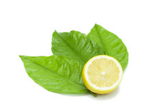 Lemon fruit decorated with leaves on white Stock Photography