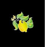 Lemon fruit drawing. Stock Photo