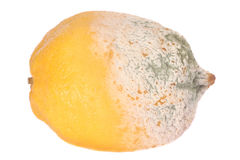 Lemon fruit half-damaged. By green mould Stock Image