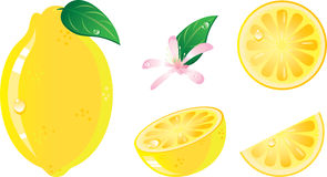 Lemon fruit icon set. Lemon fruits icon set. Isolated in a white background. Without transparency Royalty Free Stock Image