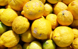 Lemon fruit. Stock Photo