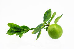 Lemon fruit with leaf isolated on white Royalty Free Stock Photography