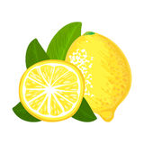 Lemon fruit. Vector hand drawing illustration Royalty Free Stock Photo