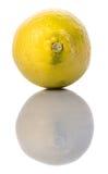 Lemon Fruit XIII Stock Images