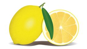 Lemon, Fruit, Yellow, Citrus Royalty Free Stock Image