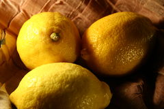 Lemon fruits. Lemon stock photo