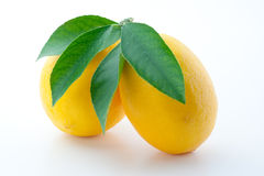 Lemon. Fruits with leaves isolated on white. Lemons with leaves isolated on white background Royalty Free Stock Images