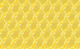 Lemon fruits slice abstract seamless pattern Stock Photography