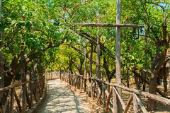 Lemon garden of Sorrento. Fruits arch in Lemon garden of Sorrento at summer with passage stock photos