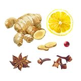 Lemon, giger and winter spices isolated on white watercolor illustration set Stock Photography