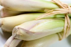 Lemon grass Royalty Free Stock Photo