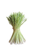 Lemon Grass Royalty Free Stock Images