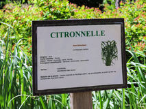 Lemon grass, Citronnelle plant Royalty Free Stock Images