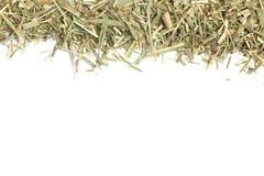 Lemon Grass. Cymbopogon citratus. Capim Limao, Santo. Stock Image