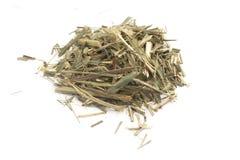 Lemon Grass. Cymbopogon citratus. Capim Limao, Santo. Royalty Free Stock Photography