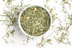 Lemon Grass. Cymbopogon citratus. Capim Limao, Santo. Royalty Free Stock Photo