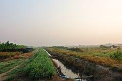 Lemon grass field cultivation, Thailand stock photos