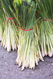 Lemon Grass Stock Photography