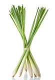 Lemon grass isolated on the white background Royalty Free Stock Photo