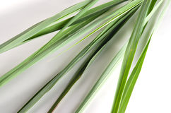 Lemon grass isolated on white background Royalty Free Stock Images