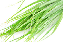 Lemon grass leaf. On white background royalty free stock photography