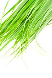 Lemon grass leaf Stock Photography