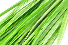 Lemon grass leaf. On white background stock images