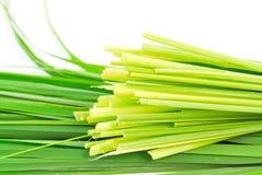 Lemon grass leaf Royalty Free Stock Image