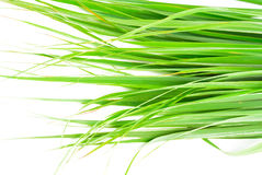 Lemon grass leaf Royalty Free Stock Images