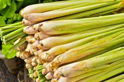 Lemon Grass Royalty Free Stock Photos