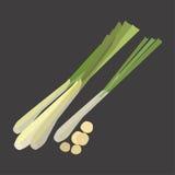 Lemon grass with slice flat design, vector illustration royalty free illustration