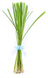 Lemon grass stand. On white background stock images