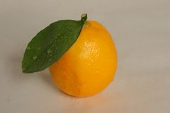 Lemon on a gray background. Single lemon wiht water-drops on a gray background Royalty Free Stock Images