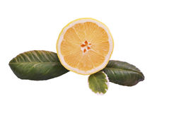Lemon half with green leaves on a white background Stock Photos