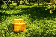 Lemon harvest Stock Photo