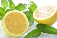 Lemon and herbs Royalty Free Stock Photo