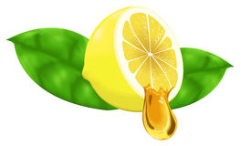 Lemon and honey gradient mesh Stock Images