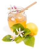 Lemon honey Stock Images