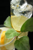 Lemon and Ice Cubes in Soda Water Stock Image