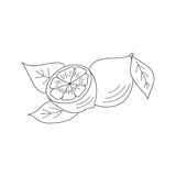 Lemon icon, vector sketch illustration Royalty Free Stock Images