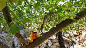 Jam. Lemon jam from the lemon tree Royalty Free Stock Image