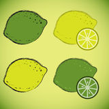 Lemon and laim. Drawings of lemon and lime slices with Royalty Free Stock Photography