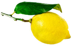 Lemon with leaf stock photos