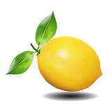 Lemon with leaf Royalty Free Stock Photography